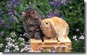 rabbit 23 desktop widescreen wallpaper