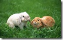 rabbit 27 desktop widescreen wallpaper