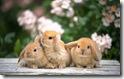 rabbit 34 desktop widescreen wallpaper