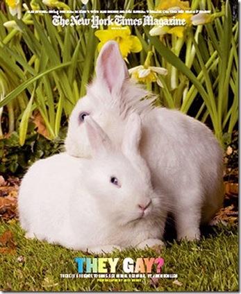 gay rabbits