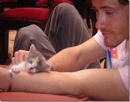 boys cats21