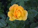 موسوعة رائعة من الورود 16
