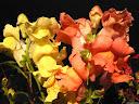 موسوعة رائعة من الورود 6