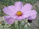 موسوعة رائعة من الورود 13