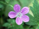 موسوعة رائعة من الورود 58
