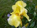 موسوعة رائعة من الورود 65