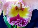 موسوعة رائعة من الورود 30