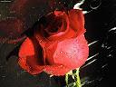 موسوعة رائعة من الورود 39