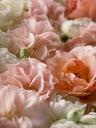 موسوعة رائعة من الورود Pattren%20%285%29