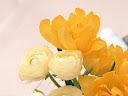 موسوعة رائعة من الورود Flowers-wallpaper%20%2814%29
