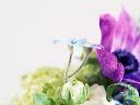 موسوعة رائعة من الورود Flowers-wallpaper%20%2811%29