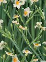موسوعة رائعة من الورود Pattren%20%2813%29