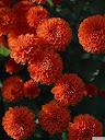 موسوعة رائعة من الورود Pattren%20%2823%29