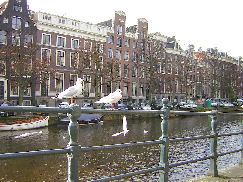 Amsterdam, uccelli sui Canali