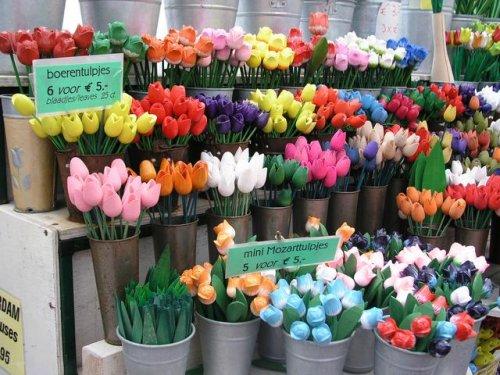 Keukenhof, i tulipani.