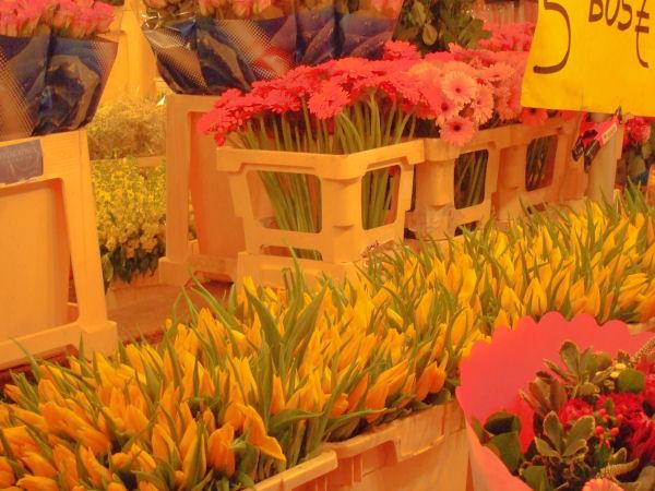 Utrecht, fiori