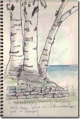 6 19 more birch