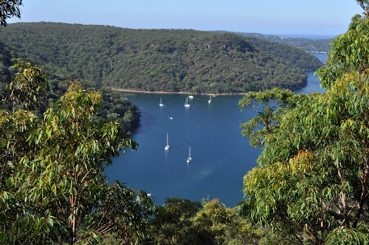 A view of Morning Bay from a lookout point in Ku-ring-gai National Park. Photo by Bobbi Lee Hitchon