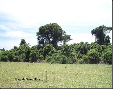 Mata da Santa Rita 2 leg cópia