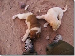 Petra Puppies