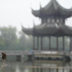 pagoda&spider.jpg