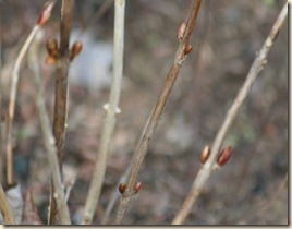 SpringDay_Hydrangea