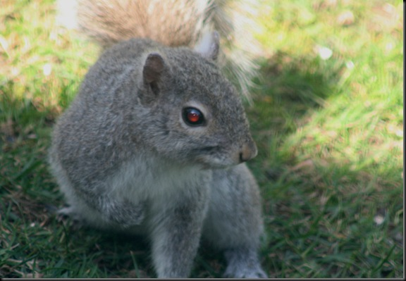 Morning_Squirrel3
