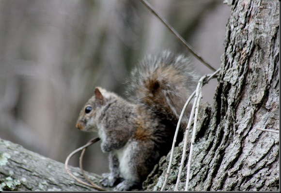 Squirrel2_March25