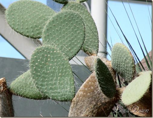 FPC_Cactus