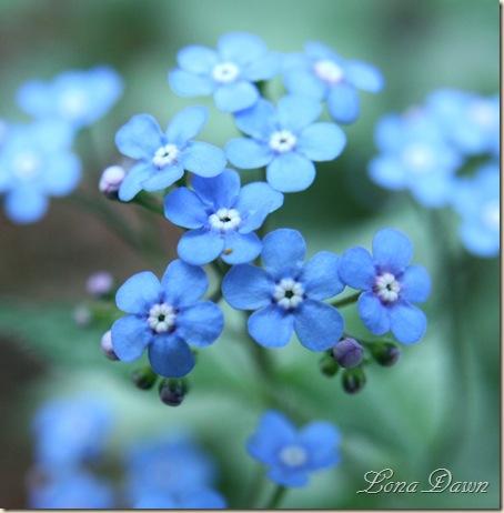 JF3_Blue