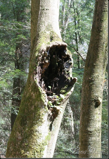 CH_TreeGrowth_Spring