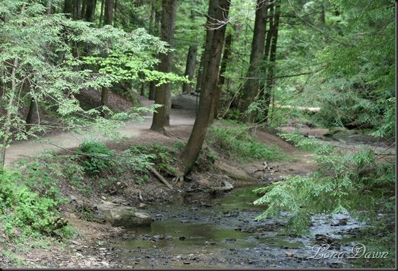 CedarFalls_Trail
