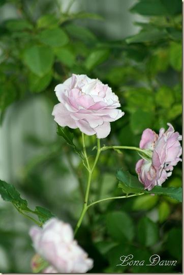 Rose_LSimplicity