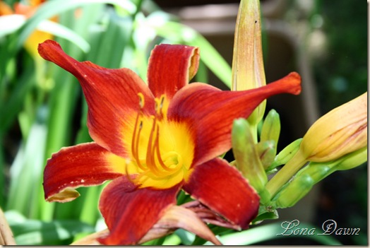 HH_Lily_2010