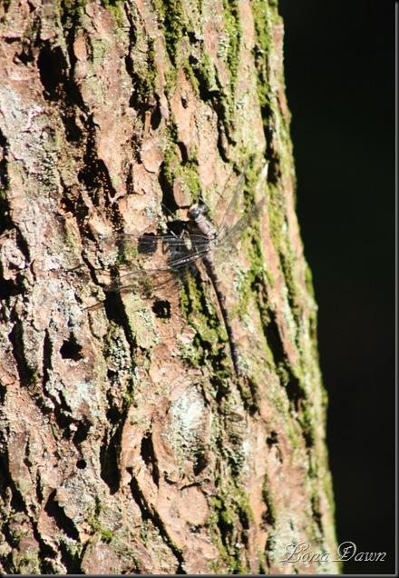 OMC_Camflouge2_Dragonfly