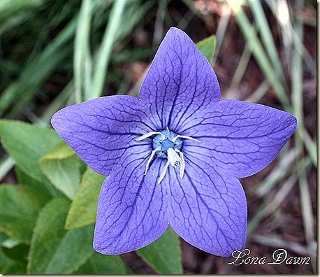 BlueClips_Aug30