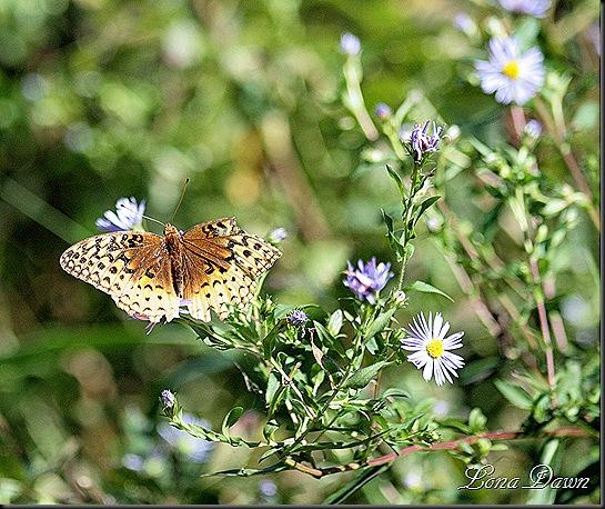 RNP_Butterfly2