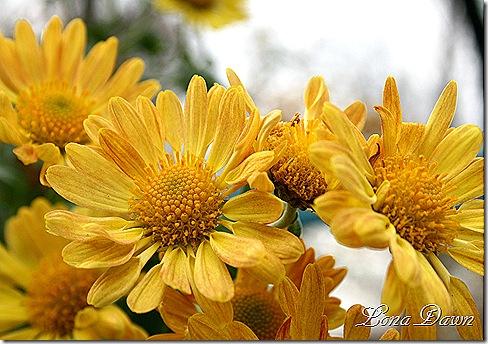 Mum_Yellows