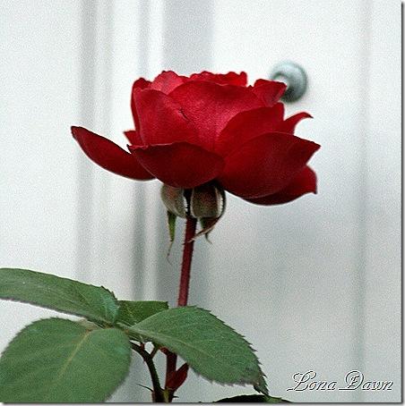 Crimson_B_Nov13