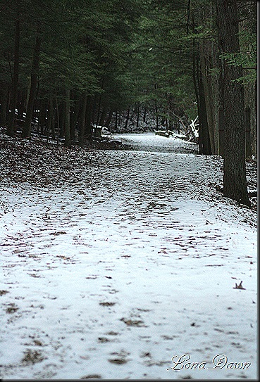 OMC_UpperTrail_Dec11