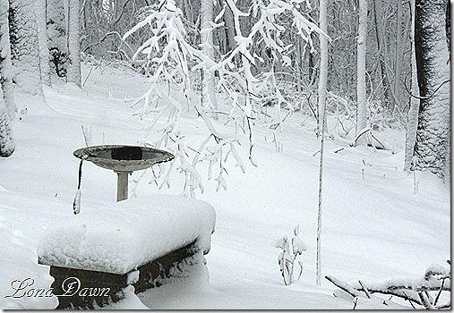 Birdbath Winter