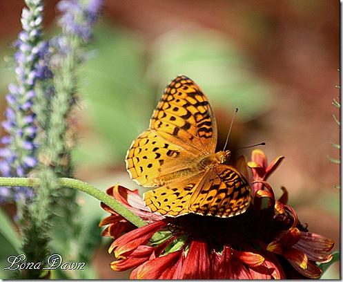 Floral_Wings