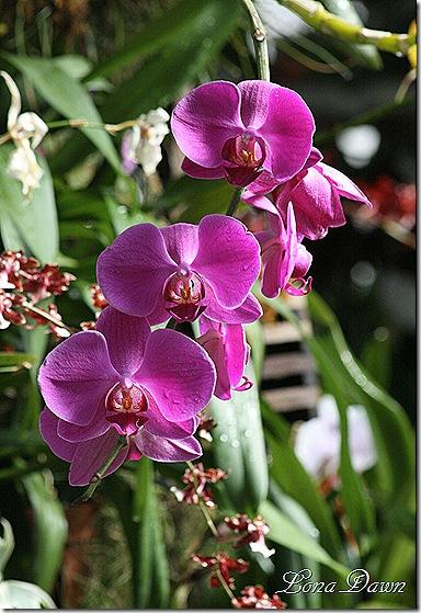 FPC_Orchids2