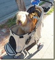 Alexia on Her Walk