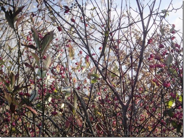 Salburua Nov 2009 004