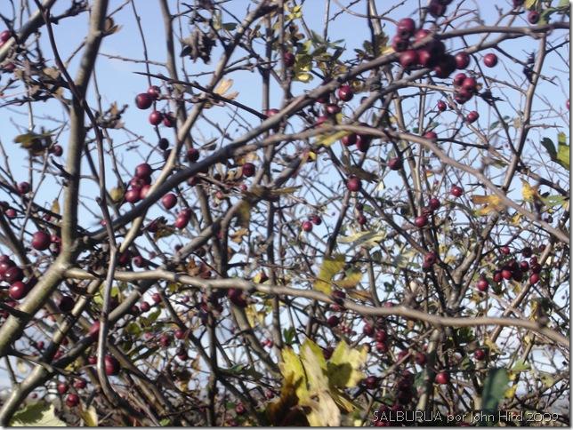 Salburua Nov 2009 002