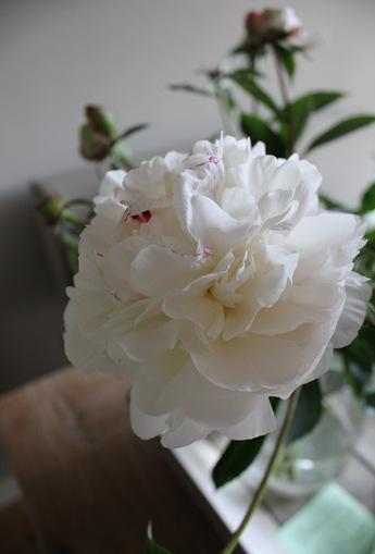 bloemen tot 2011 (8)