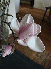 bloemen tot 2011 (16)