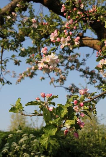 bloesem 2011 022