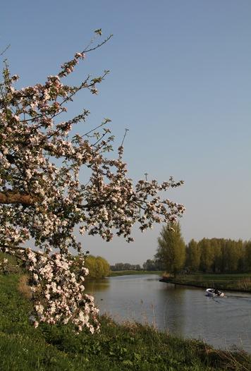 bloesem 2011 037